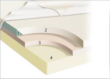 Electric Beds Mattress Bed Mattresses